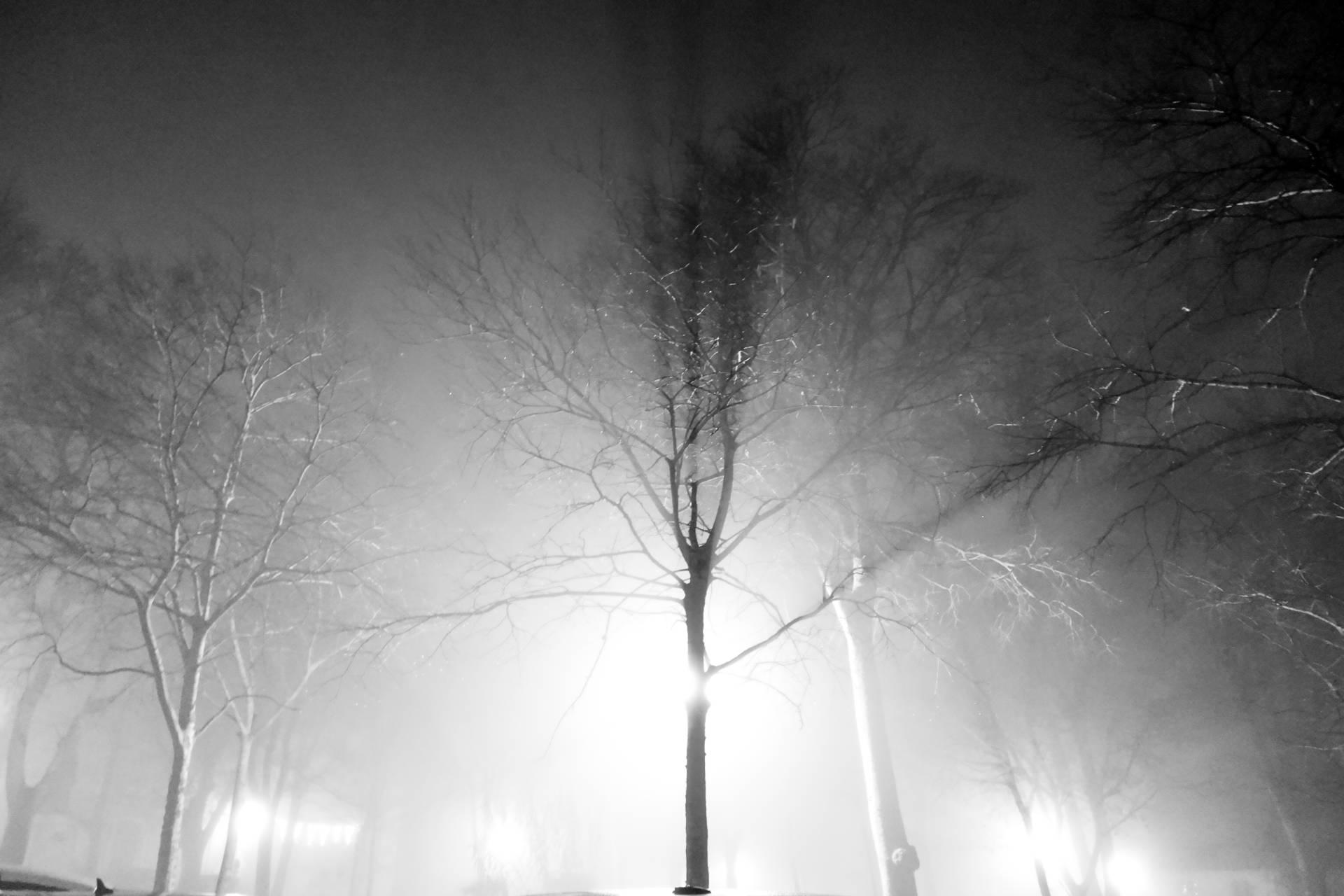 silhouette d'arbre sans feuilles dans la brume, en contre-jour