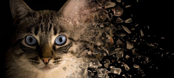 Portrait de chat sur fond noir avec la partie droite de la tête qui se disperse par effet numérique